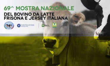 Alla FAZI 2021 la Mostra nazionale del bovino da latte Frisona e Jersey Italiana di ANAFIJ e Coldiretti